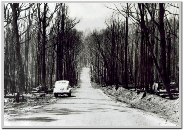 black friday bushfires  vic 1939