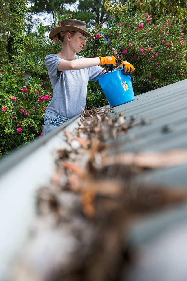 Person clearing leaves from roof gutter
