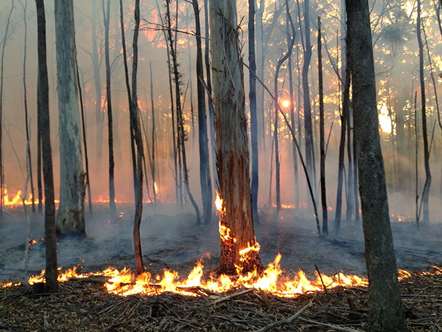 Prescribed burn in Wombat State Forest, Victoria